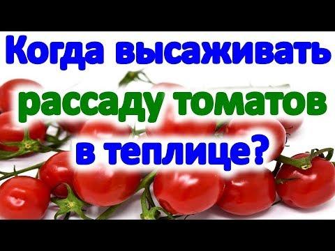Когда высаживать рассаду томатов в теплице. Особенности посадки рассады помидор в 2019 году.