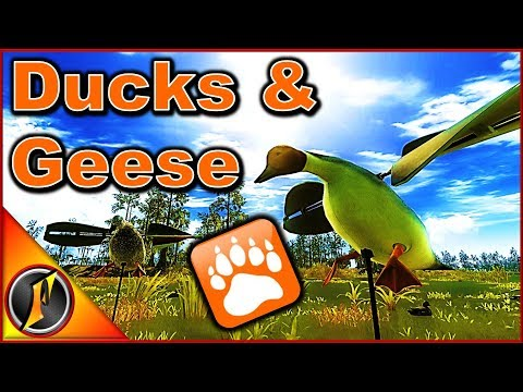 Duck & Goose Hunt | TheHunter Classic 2018