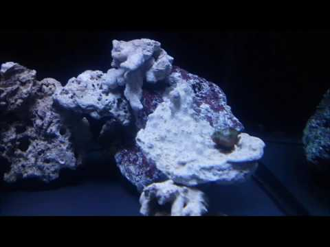 update on my 55 gallon marine tank
