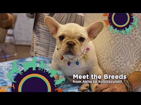 Meet and Compete 2017 - AKC Meet the Breeds & Masters Agility Championship