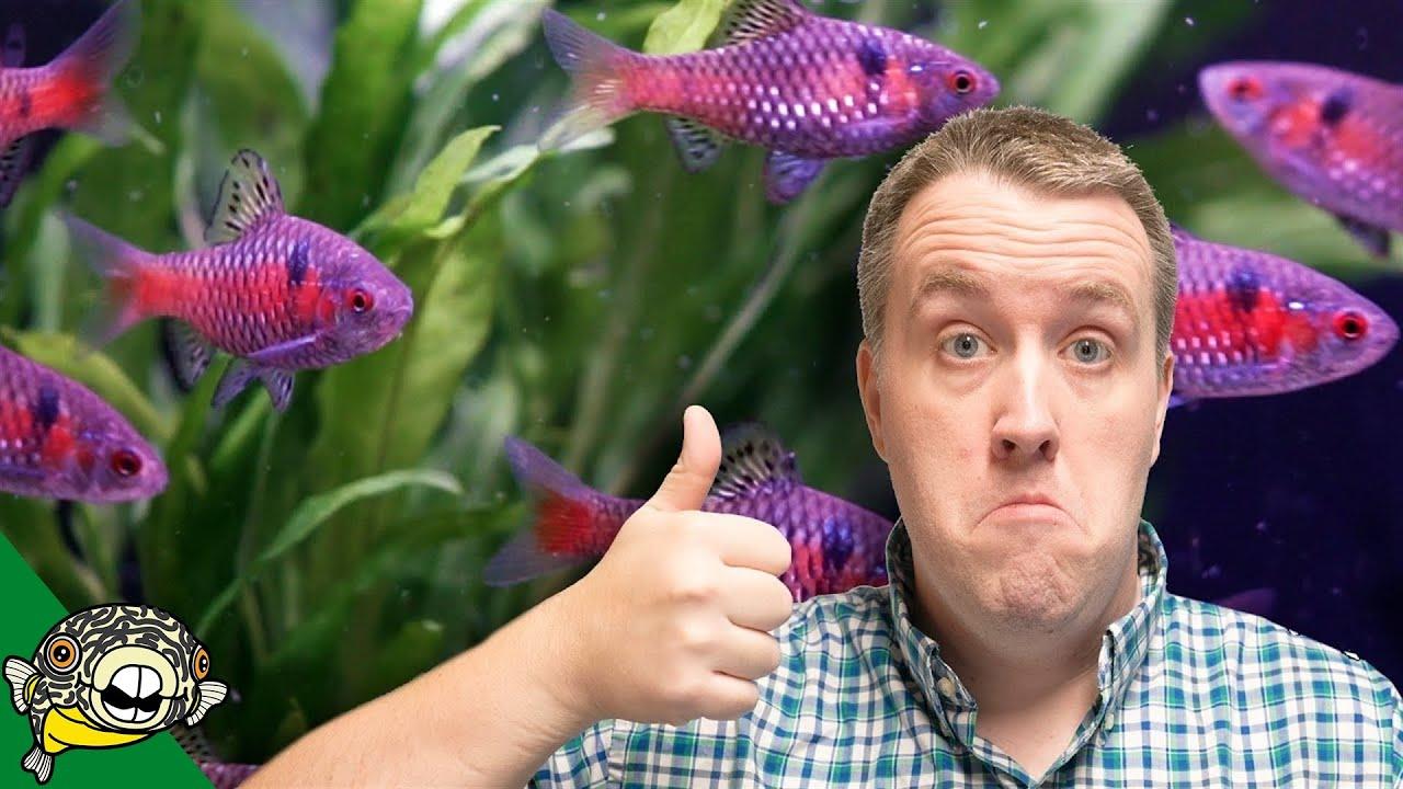 community-fish-aquarium-unboxing