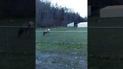 Benezett Elk 4-13-19