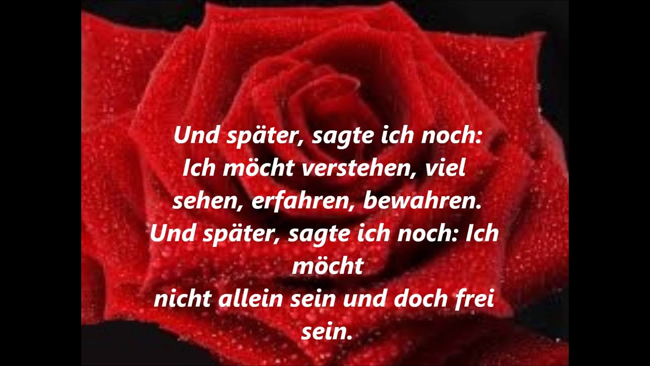 Für mich solls rote rosen regnen text