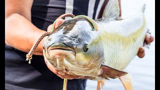 Ловля белого амура Рыбалка на реке Ахтуба Трофейная рыбалка Белый амур 6 300кг 6кг 4 150
