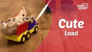 Kid Pulls Kitten Around In Toy Truck
