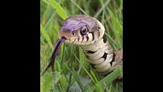 BM1 Commentary: 5 Snakes The Black Manosphere 3.0  must look out for
