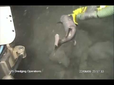 Shark vs Dredge Pump