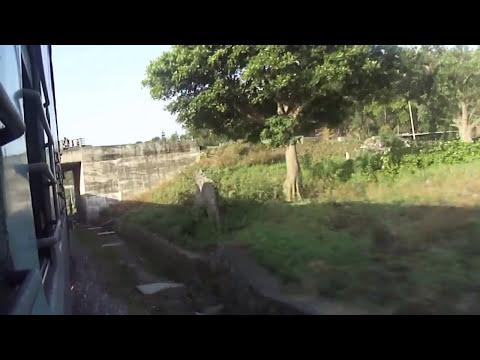jammu-udhampur-katra (Train Window view)