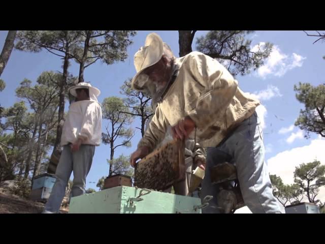 経済危機に揺れるギリシャの若者を追ったドキュメンタリー!映画『ハッピー・リトル・アイランド 長寿で豊かなギリシャの島で』予告編
