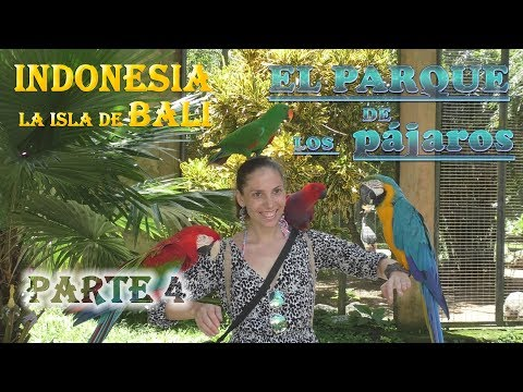 Mi viaje a Indonesia. La isla de Bali. Patre 4. Bird parque..))