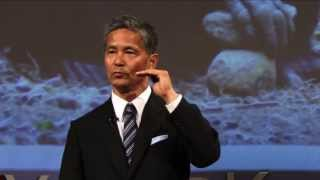 Imagination: Human mind viewed from chimpanzee mind: Tetsuro Matsuzawa at TEDxYouth@Kyoto 2013