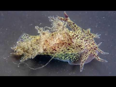 Science Today: Sea Slug Discovery | California Academy of Sciences