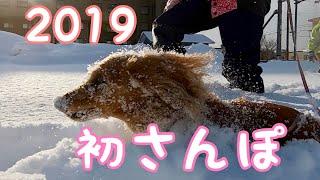 2019年1月1日。今年度の初散歩をしてきました。 天気がよくてとても気持...