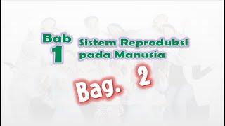 Kelas 9 Bab 1 Sistem Reproduksi Manusia Bag. 2