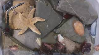 Ep 5: Starfish, sea slugs & feather stars - Rockpool stars!