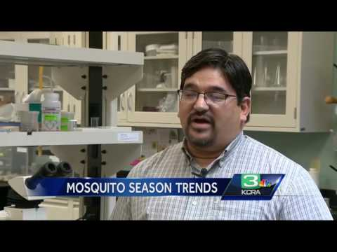 Summer means mosquitoes, so where are the bugs?