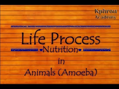 Life Process - Nutrition in Animal (Amoeba) Part 1- Class 10