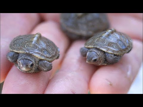Top 10 Exotic Low Maintenance Cool Pets Youtube