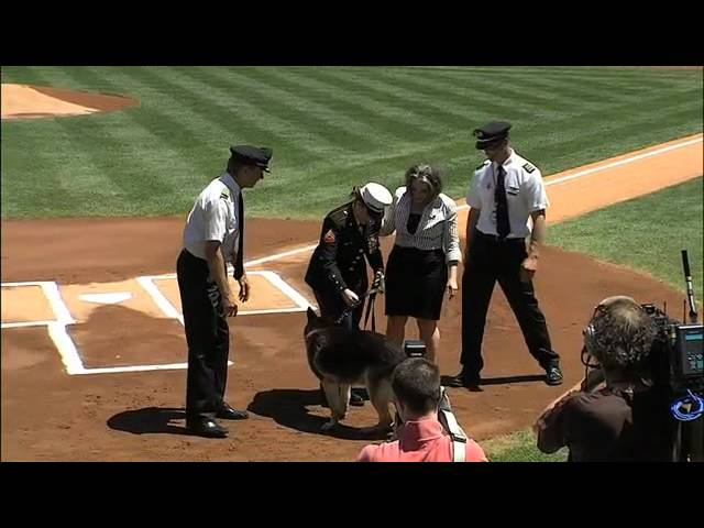 Corporal Megan Leavey and Sergeant Rex Honored by Yankees on May 13