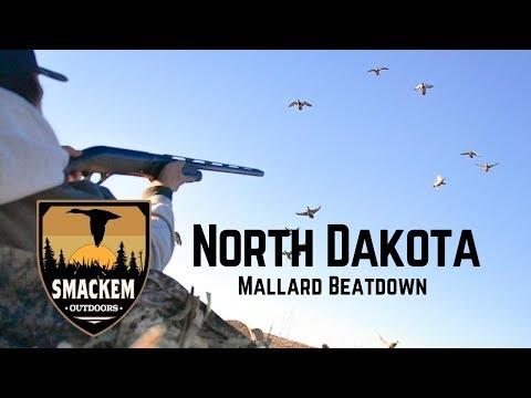 North Dakota Mallard Beatdown!