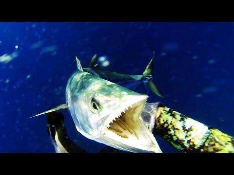 Spearfishing for Spanish / King Mackerel in Australia Part 1