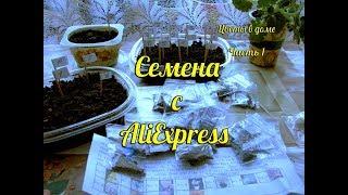 Семена орхидей с AliExpress| Семена орхидей из Китая распаковка и посадка
