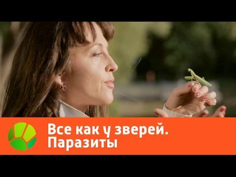 Диета при глистах: каких продуктов боятся глисты у взрослых