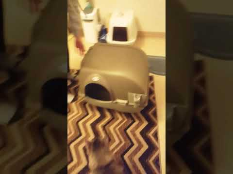 OMEGA PAW AND ROLL LITTER BOX tutorial - EASIEST LITTER BOX EVER !!