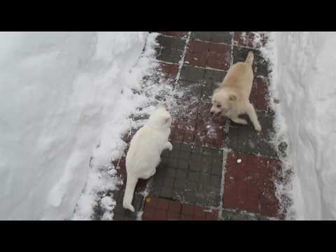 Funny Game Collision Dog and Cats in the Snow