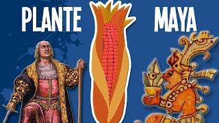 Cette plante maya conquiert le monde - UPH #13