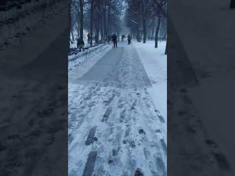 Москва. В Москве сегодня сажают кусты при -2° сегодня 4 декабря