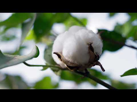 Producers and the U.S. Cotton Trust Protocol