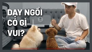 Cún tăng động? Dạy cún ngồi qขan trọng như nào? | Huấn luyện chó cơ bản BossDog