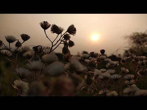 Latest New My Best Good Morning Wish Nature HD Video