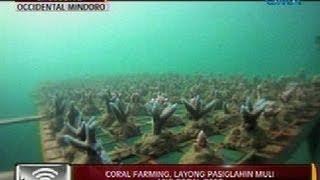 24Oras: Exclusive: Coral farming, layong pasiglahin muli ang mga coral reef