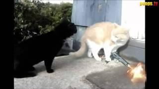 Кошачьи 90-тые (вырезка из Шарик Шоу 4)
