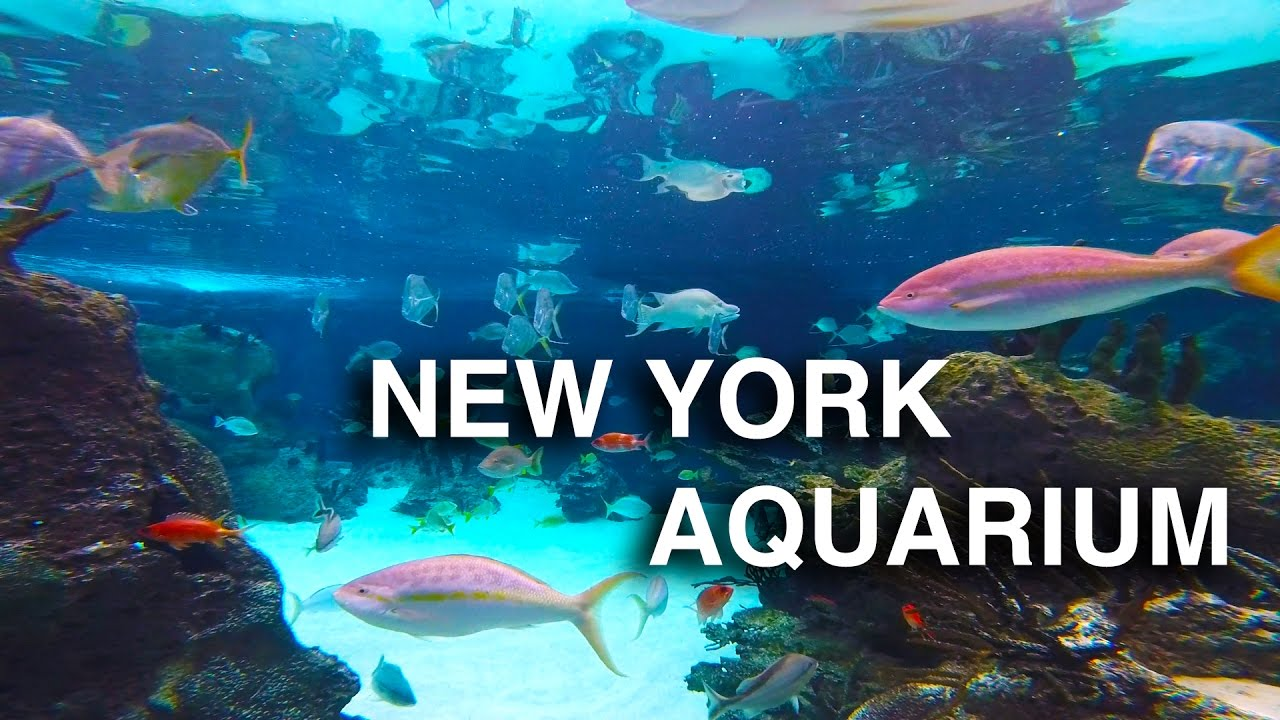 New York Aquarium | Coney Island - YouTube