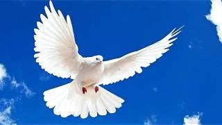 Bangla Islamic Song 2017 New | Mon Ure Jay Nill Akasher Pranto Chuye |  Bangla Gojol 2017 New