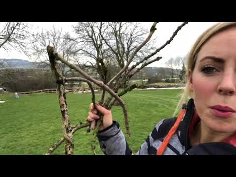 Farm workout! Spring is back! Staying fit while working.