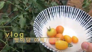 뒷마당 과일 따기