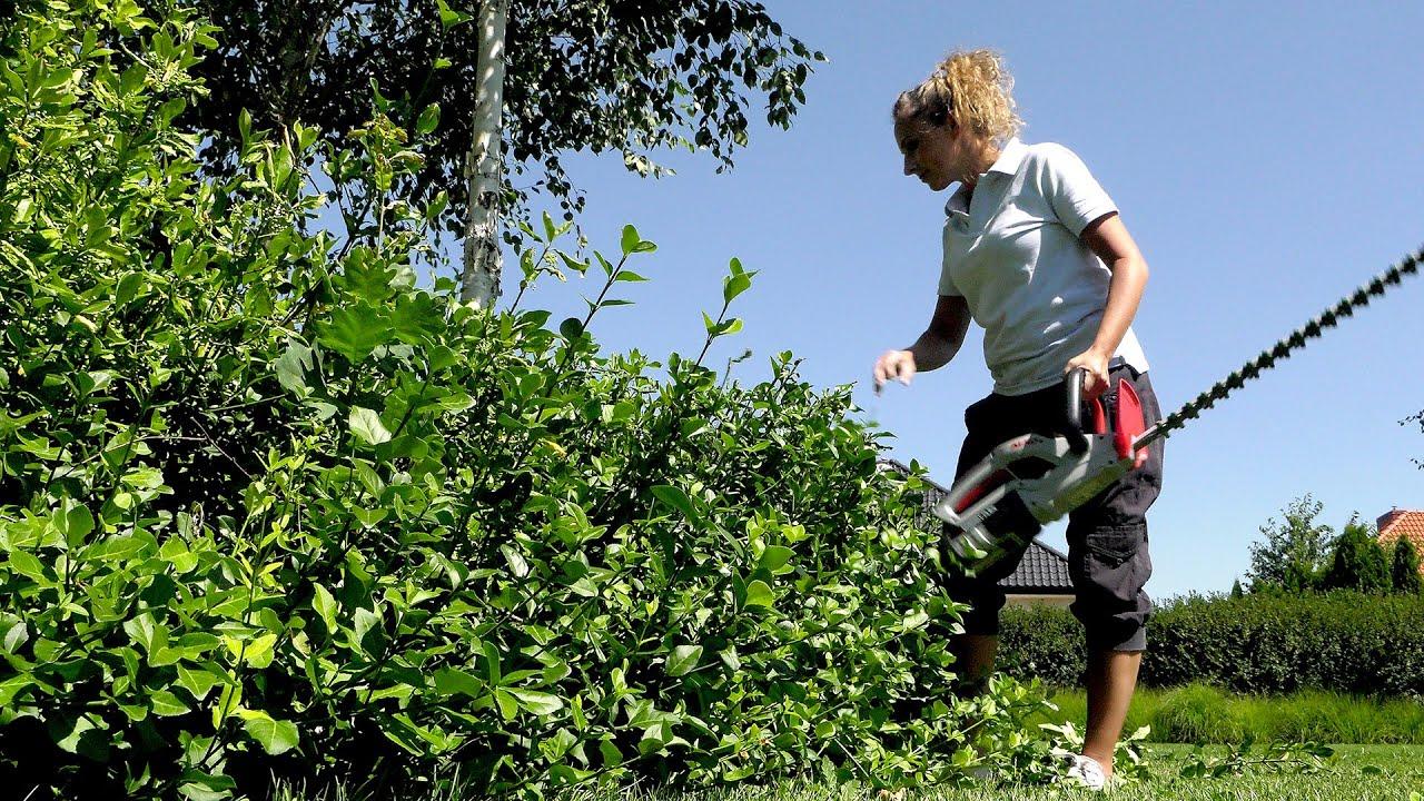Sierpień w ogrodzie. Kalendarz ogrodnika na 10.08 - 16.08. Prace ogrodnicze w sierpniu