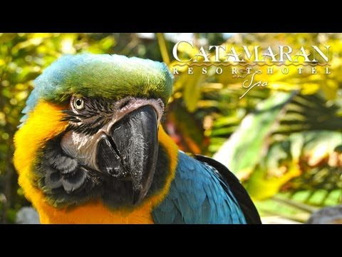 San Diego Attractions - Exotic Talking Birds at Catamaran Resort Hotel and Spa