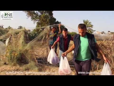 GAZA DAILY IFTAR MEALS PART 4 - RAMADAN 2016
