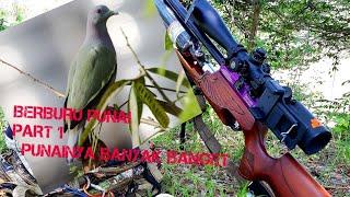 Berburu burung punai part 1