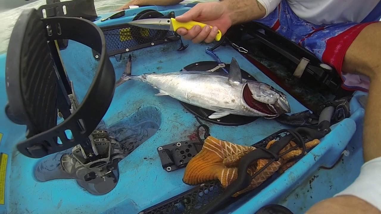 Spyderco fish hunter youtube for Spyderco fish hunter