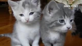Cutest Baby in the world ♥ Top Cute Kitten Video