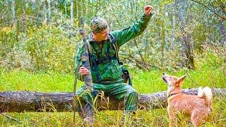 Щенок лайка, охота 3
