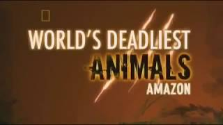 Deadliest Animals - Amazon - Full Documentary