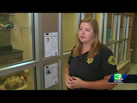 Officials: Sacramento County animal shelter is overcrowded