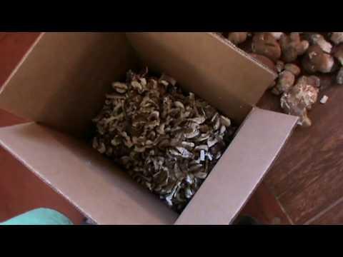 Как хранить белый гриб / how to store white fungus
